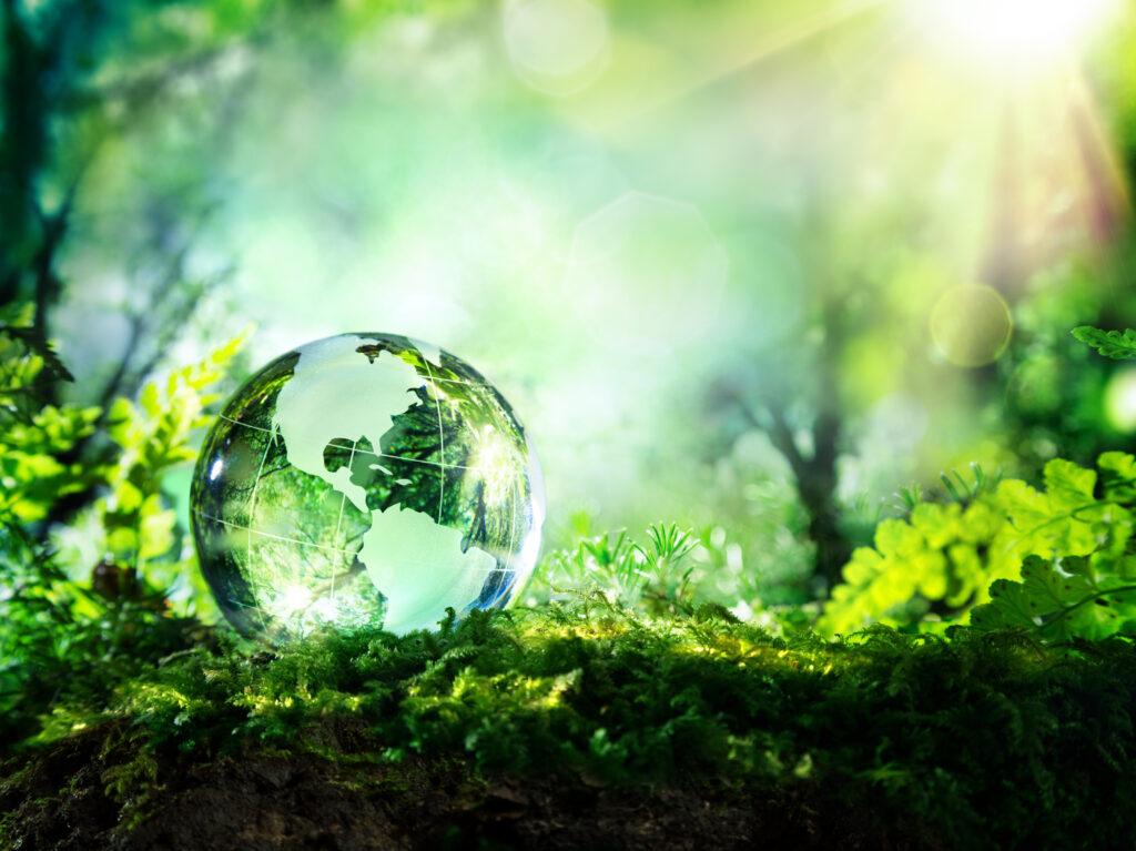 Verdens miljødag 2021